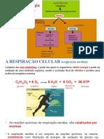 PPT_Utilização Da Energia Pelos Seres Vivos - Biologia e Geologia