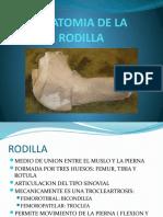 ANATOMIA DE LA RODILLA