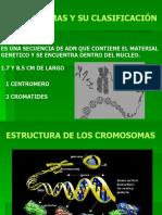 CROMOSOMAS Y SU CLASIFICACION