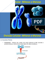 Mitose e Meiose