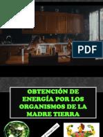 METABOLISMO CELULAR pdf