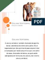 diapositivos_coluna vertebral
