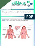 04- sistema endocrino