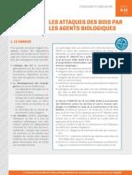 fi-pathologie-batiment-b10-attaques-bois-agents-biologiques-outre-mer