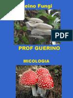 Reino fungi 2011