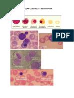Resumo Células sanguíneas - Hematologia