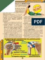 Texto de anatomía y Fisiología Articulacion Dr. Carlos Mamani L.