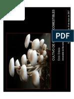 cultivo de hongos comestibles 1