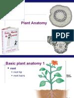 AP Bio Plant Anatomy(KFogler)