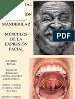 Boca, Lengua, Musculos de La Expresión Facial, Ncvii