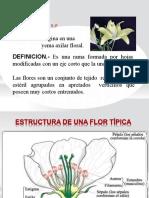 LA FLOR 5S