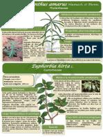 18-Poster-formation-Madagascar-Phyllanthus-amarus-et-Euphorbia-hirta-JdM