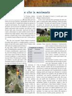 pagine_Mosaico[1]