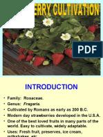 Strawberry Technical Presentation