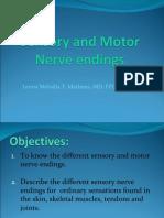 Sensory and Motor Nerve endings