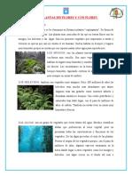 Conociendo La Reproduccion de Las Plantas