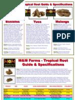 M&M Root Education