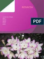 Power Point Rosacea Final