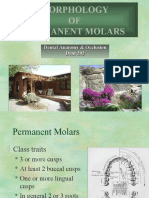 Morphology of Molars - Dental Anatomy