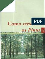 03_Como_crescem_os_Pinus