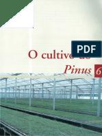 06_O_cultivo_do_Pinus