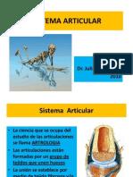 3.-SITEMA ARTICULAR