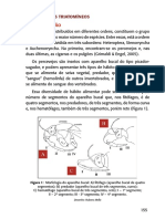 modulo3 - entomologia