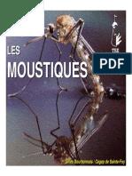 11_moustique