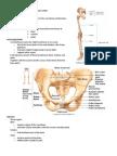 Bones_of_the_lower_limbs_handouts