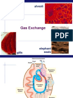AP Bio Gas Exchange/respiratory system (KFogler)