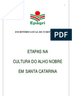 ESTAPAS DA CULTURA DO ALHO
