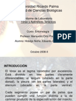 INFORME 5. TORÁX Y APÉNDICES TORÁCICOS