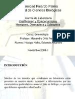INFORME 11. Clasificación de Hemiptera, Dermaptera y Coleoptera