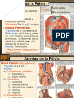 ARTERIAS PELVIS PLEXO LUMBOSACRO