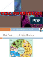 6th_Cell_Organelles