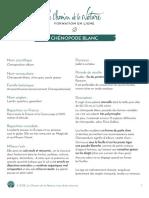 Formation du Cueilleur - Fiche plante - Chénopode blanc - print