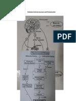 Relation between hormon and Periodontitis