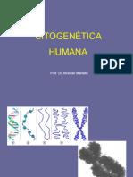 aula_citogenetica