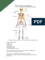 Ativiadade Avaliativa de Ciências Ossos e músculos