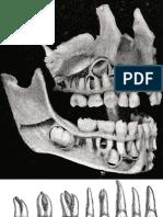 Raccolta Immagini da Anatomia del Gray