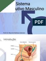 Histologia - Reprodutor Masculino.pdf