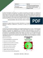 guia de contenidos  BIOLOGIA 4MEDIO SEMANA 11