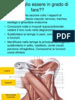 08 faringe laringe 2018
