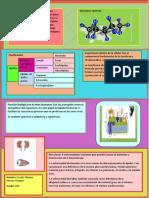 infografia biomoleculas lípidos