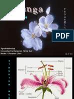Botani - Morfologi Bunga