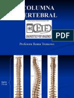 huesos y articulaciones del tronco