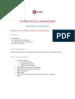 6a Práctica de Laboratorio Esquele axial y apendicular, Huesos de la cabeza y Columna vertebral