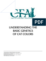 understanding-cat-colors