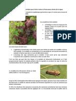 Des traitements insecticides pour lutter contre la flavescence dorée de la vigne