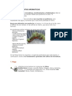 CULTIVO DE PLANTAS AROMATICAS